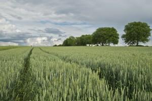 Ograniczenia w ustanowieniu hipoteki na gruntach rolnych