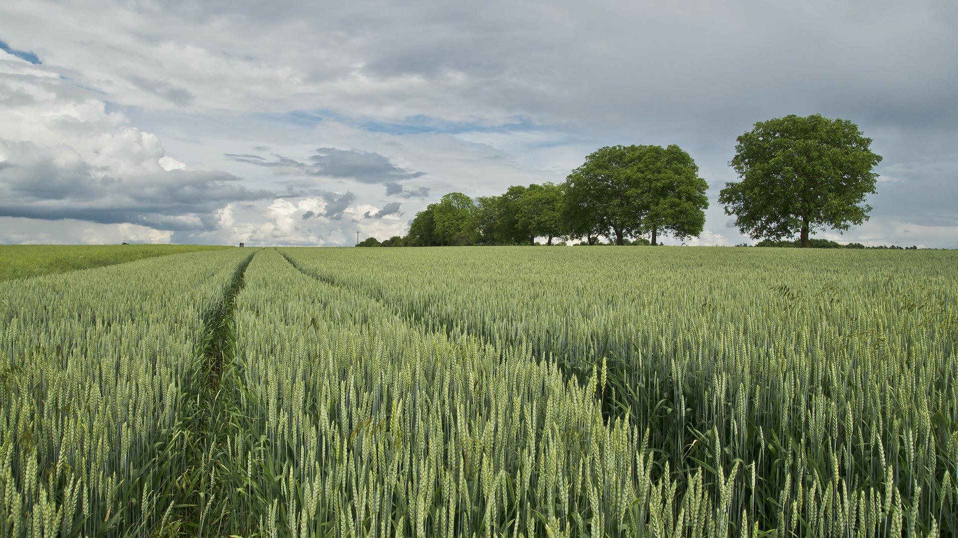 Hipoteka na gruntach rolnych